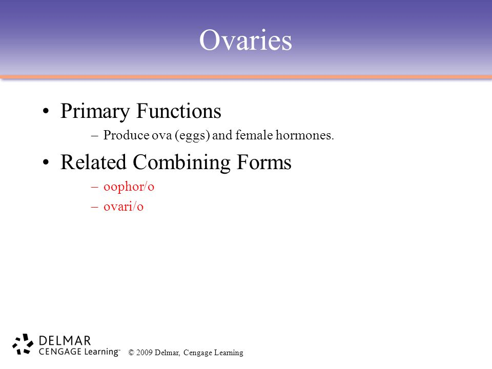 Ovaries Primary Functions Related Combining Forms