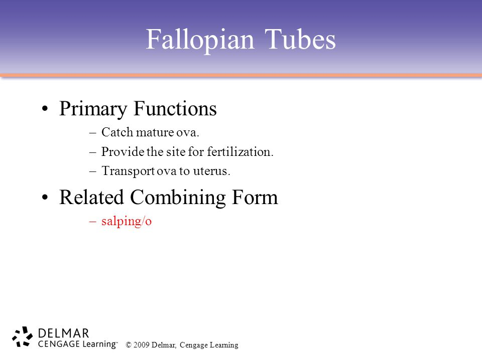 Fallopian Tubes Primary Functions Related Combining Form