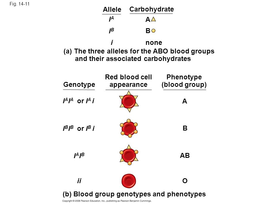 Red blood cell appearance Phenotype (blood group)