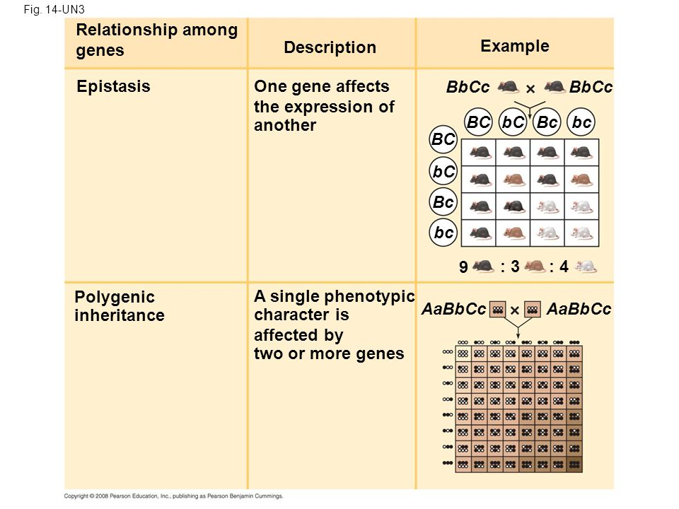 Relationship among genes Description Example Epistasis