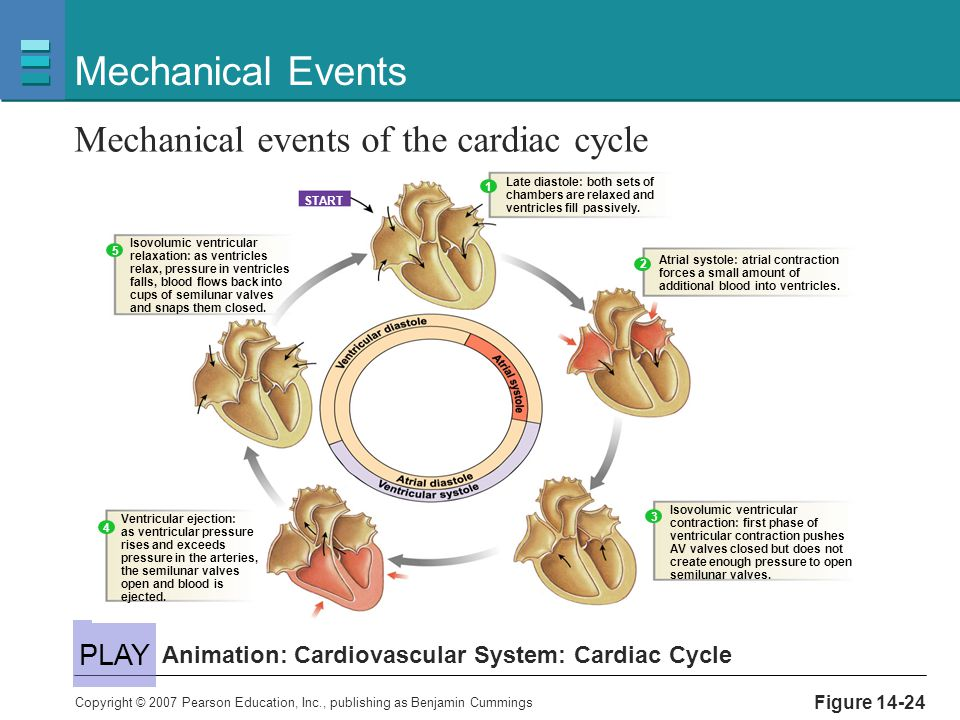 Mechanical Events Mechanical events of the cardiac cycle PLAY