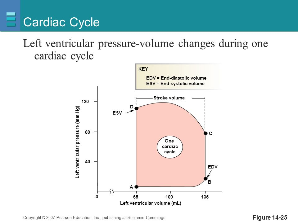 Cardiac Cycle Left ventricular pressure-volume changes during one cardiac cycle. A. B. C. 65. 100.