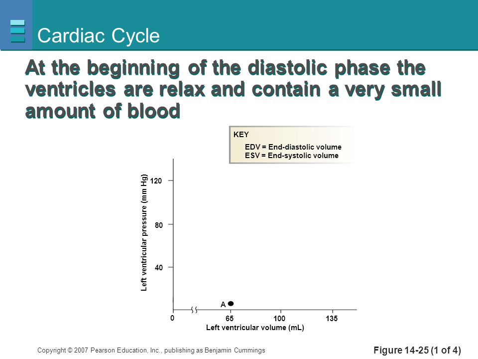 Cardiac Cycle At the beginning of the diastolic phase the ventricles are relax and contain a very small amount of blood.