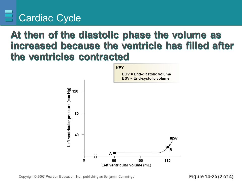 Cardiac Cycle At then of the diastolic phase the volume as increased because the ventricle has filled after the ventricles contracted.