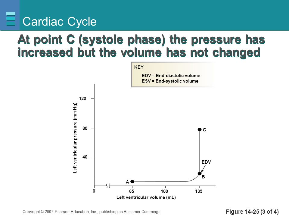Cardiac Cycle At point C (systole phase) the pressure has increased but the volume has not changed.