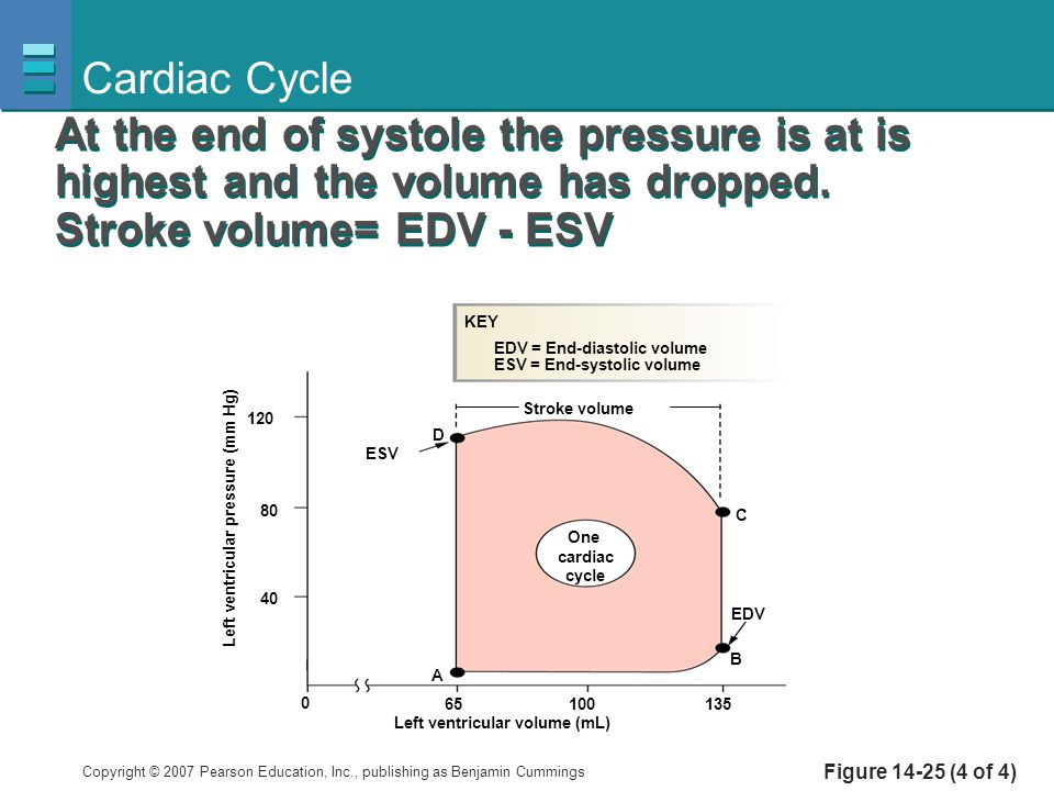 Cardiac Cycle At the end of systole the pressure is at is highest and the volume has dropped. Stroke volume= EDV - ESV.