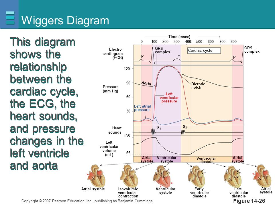 Cardiovascular physiology ppt video online download wiggers diagram ccuart Gallery