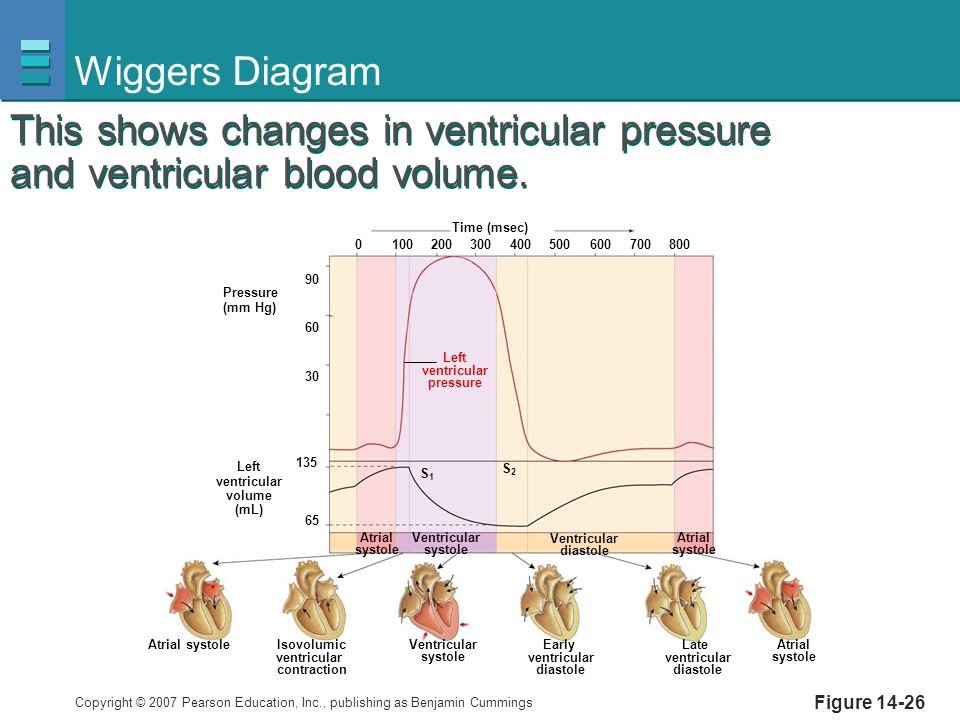 Wiggers Diagram This shows changes in ventricular pressure and ventricular blood volume. Pressure.