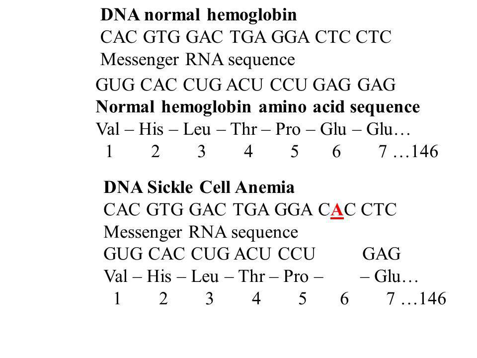 DNA normal hemoglobin CAC GTG GAC TGA GGA CTC CTC