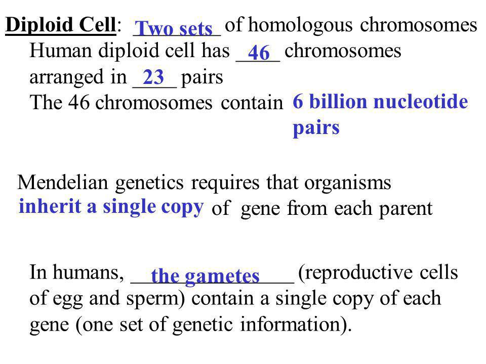 Diploid Cell: ________ of homologous chromosomes