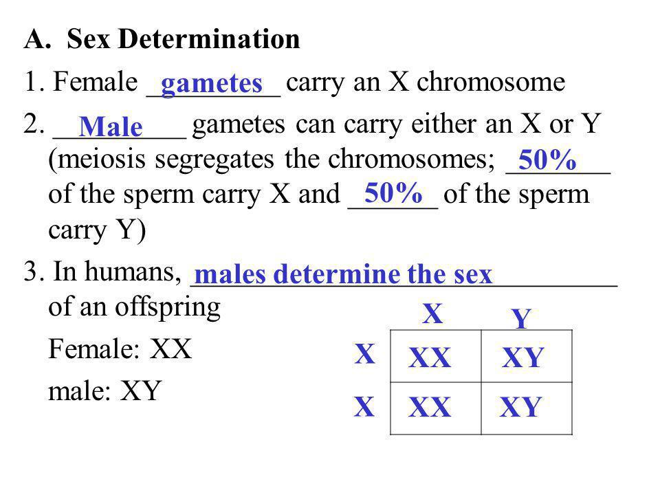 A. Sex Determination 1. Female _________ carry an X chromosome.
