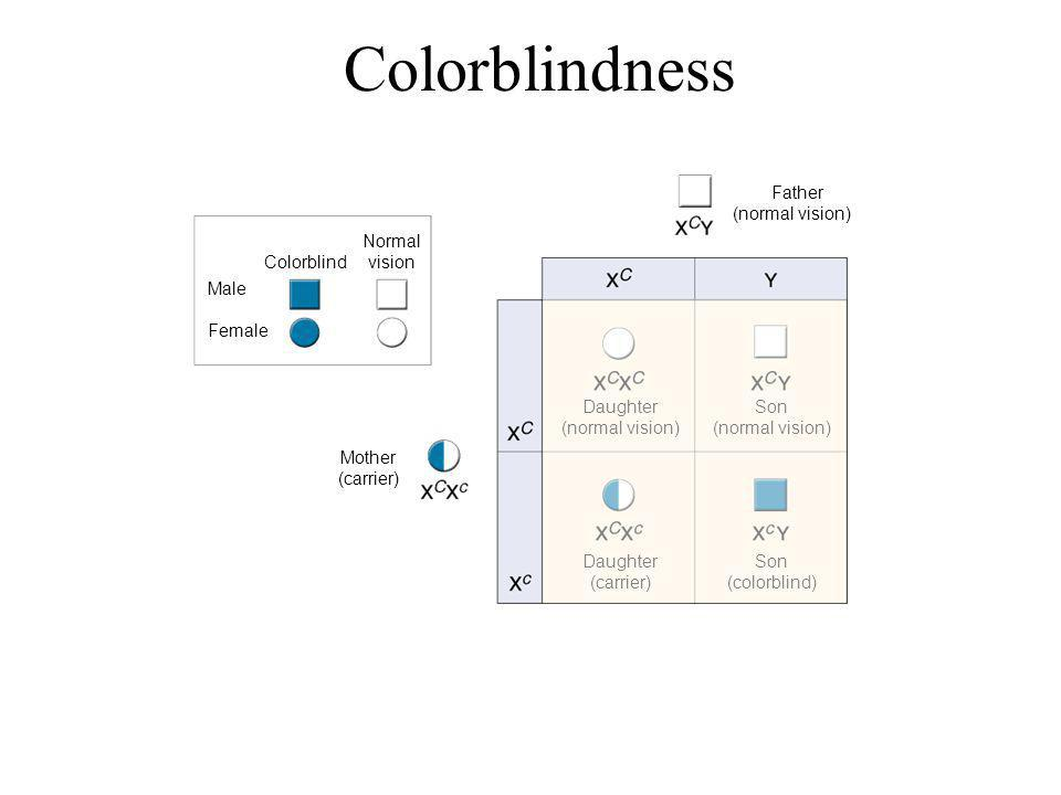 Colorblindness Figure 14-13 Colorblindness Section 14-2 Go to Section: