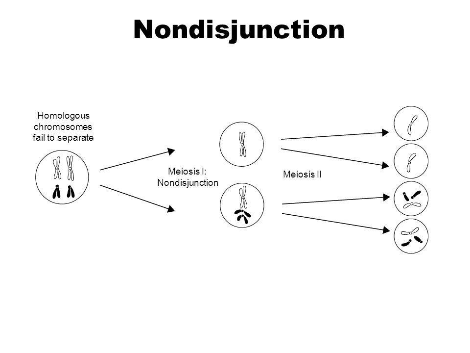 Homologous chromosomes fail to separate