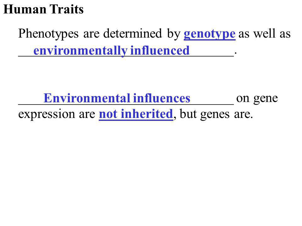 Human Traits Phenotypes are determined by genotype as well as ________________________________.