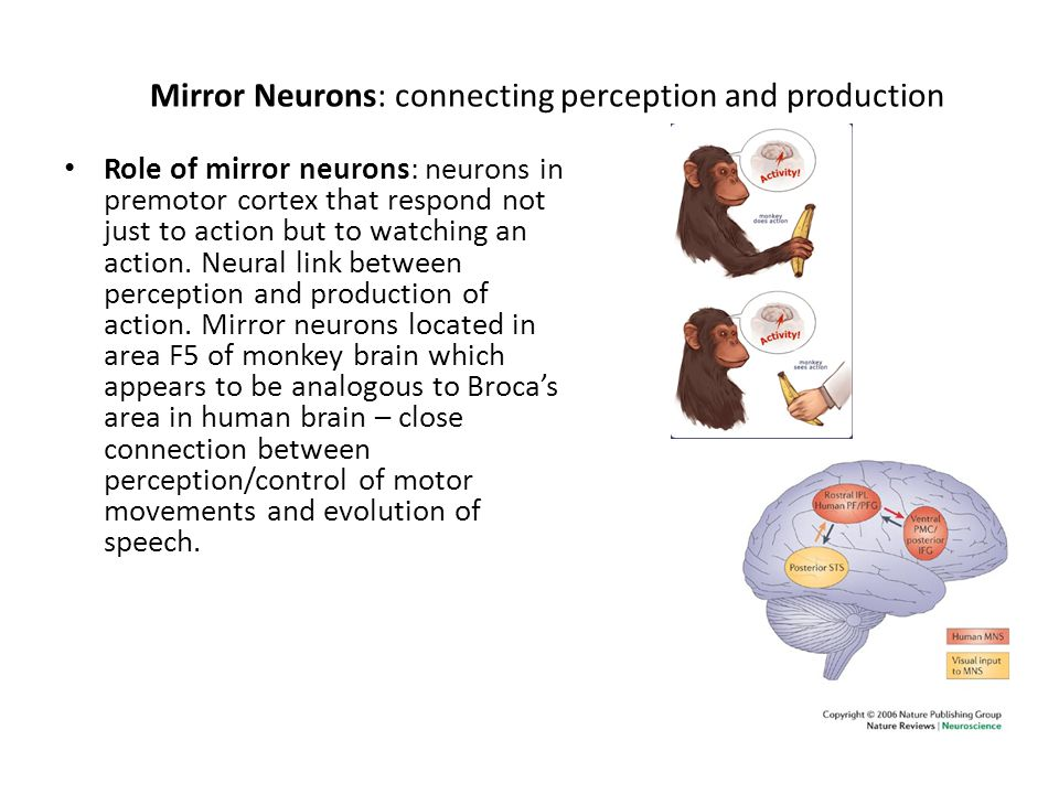 Mirror Neurons: connecting perception and production