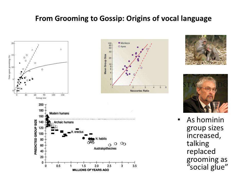 From Grooming to Gossip: Origins of vocal language