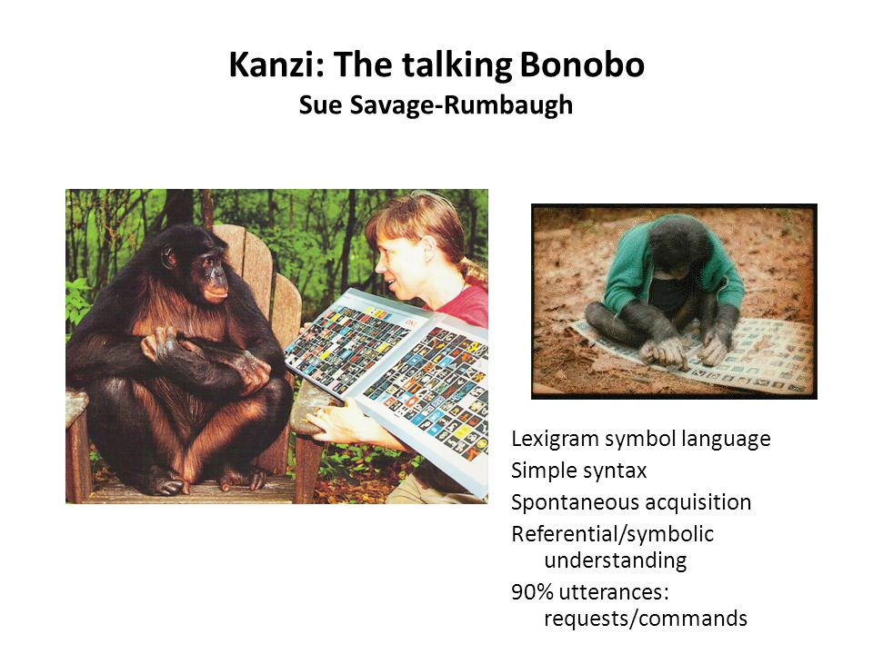 Kanzi: The talking Bonobo Sue Savage-Rumbaugh