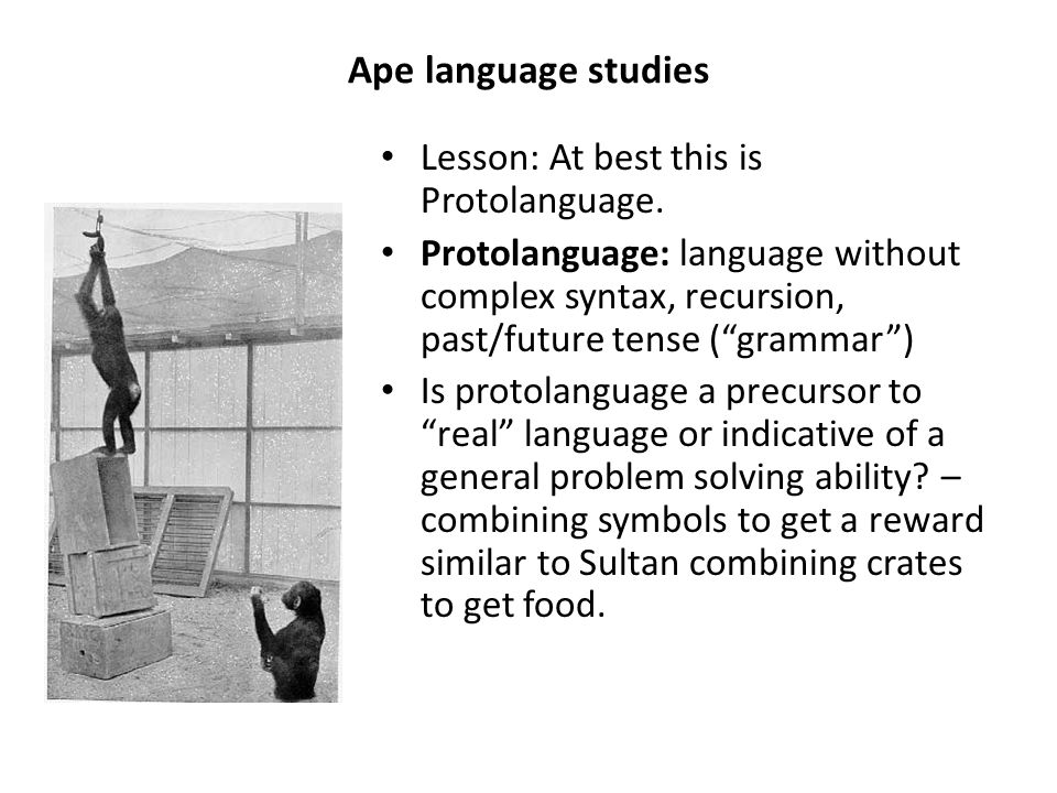 Ape language studies Lesson: At best this is Protolanguage.