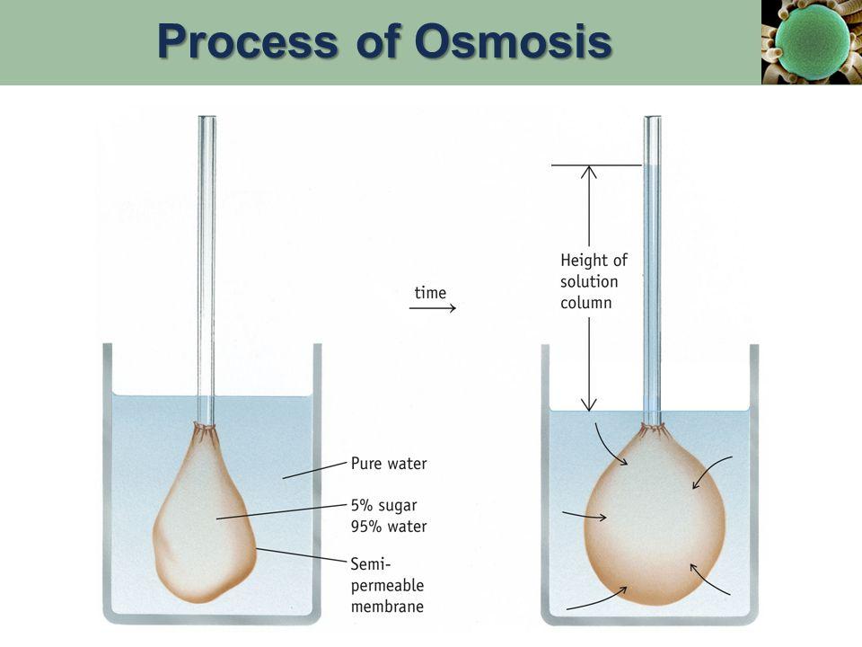 Process of Osmosis