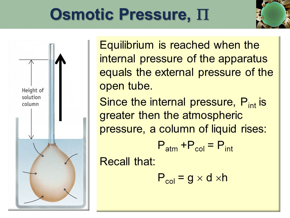 Osmotic Pressure,  Equilibrium is reached when the internal pressure of the apparatus equals the external pressure of the open tube.