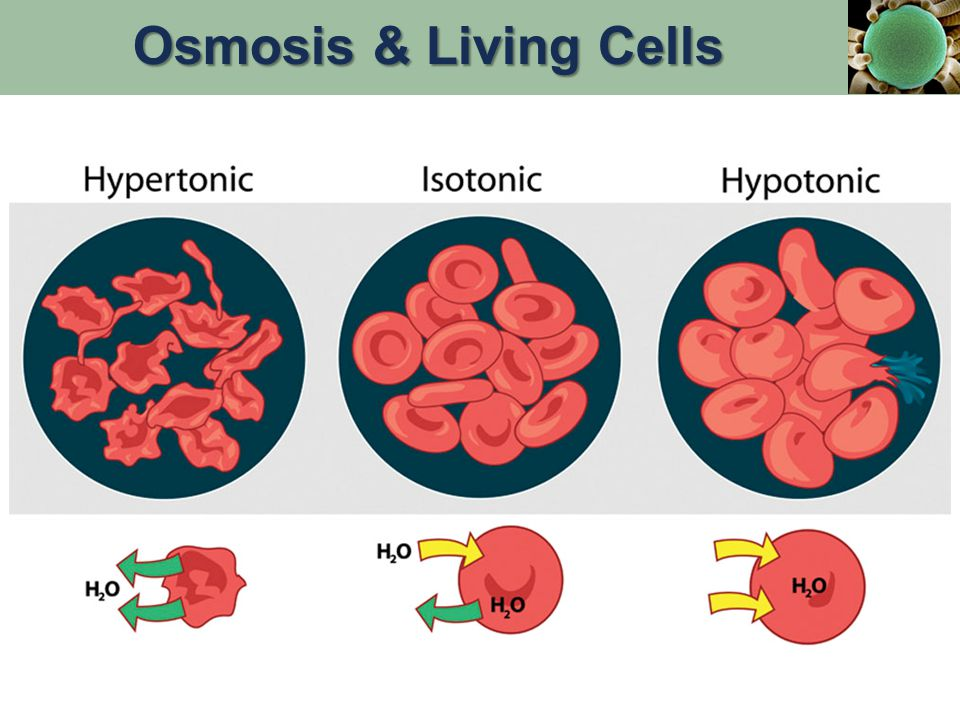 Osmosis & Living Cells