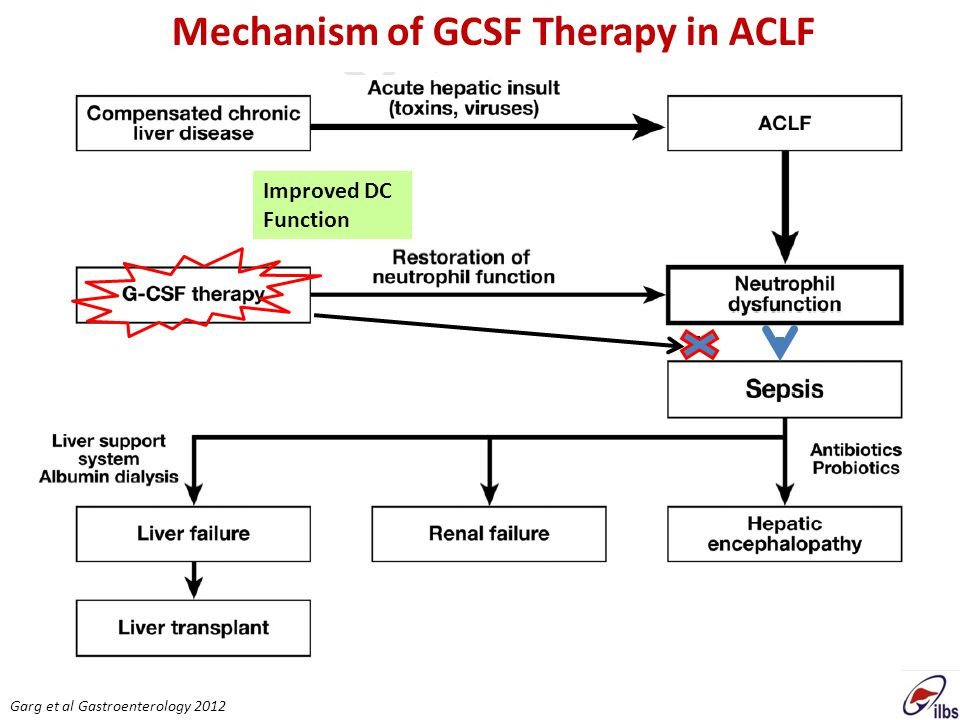Mechanism of GCSF Therapy in ACLF