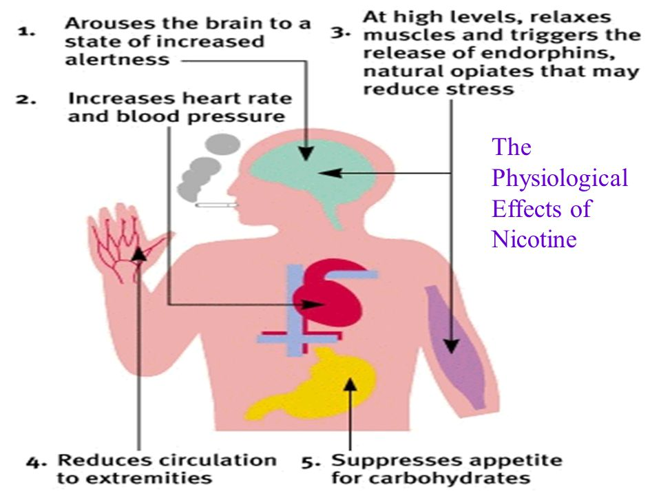 The Physiological Effects of Nicotine