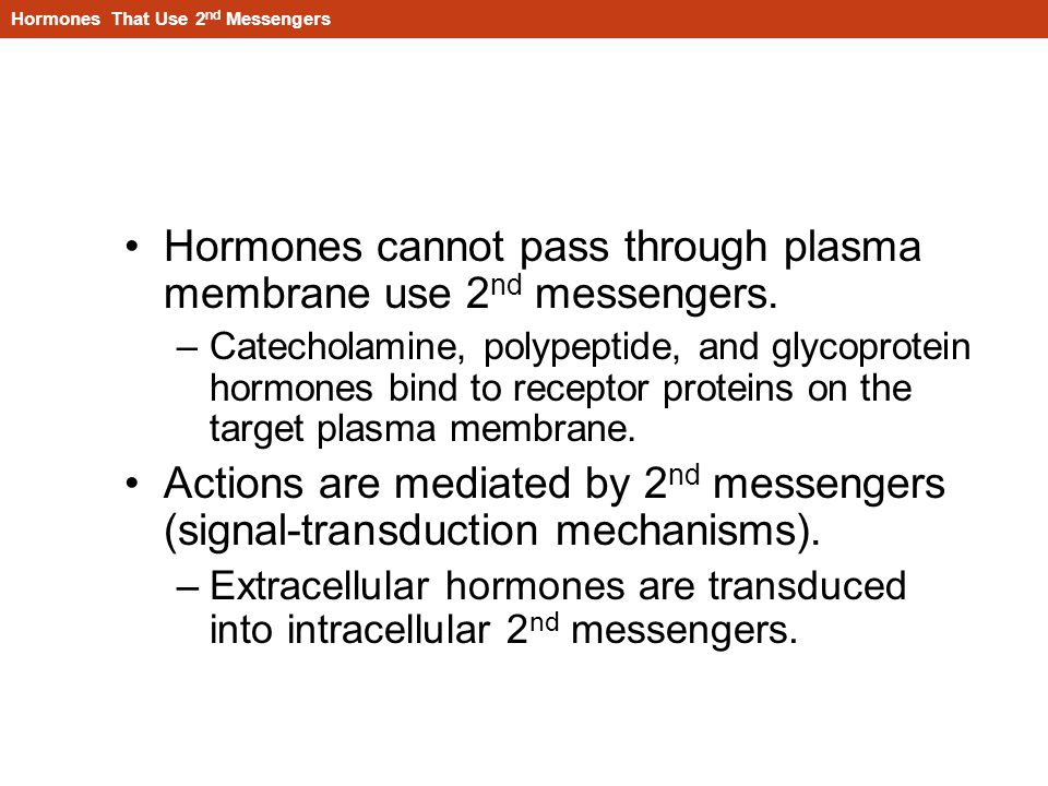 Hormones That Use 2nd Messengers