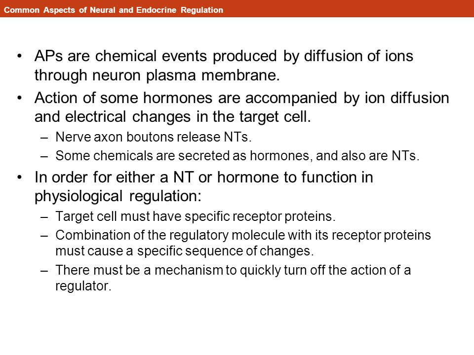 Common Aspects of Neural and Endocrine Regulation