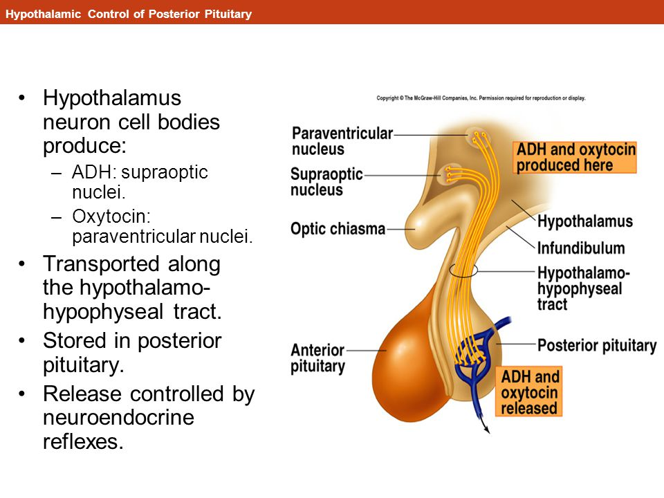 Hypothalamic Control of Posterior Pituitary