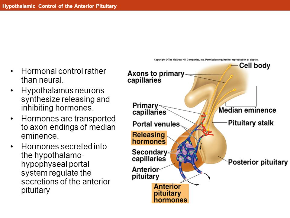 Hypothalamic Control of the Anterior Pituitary