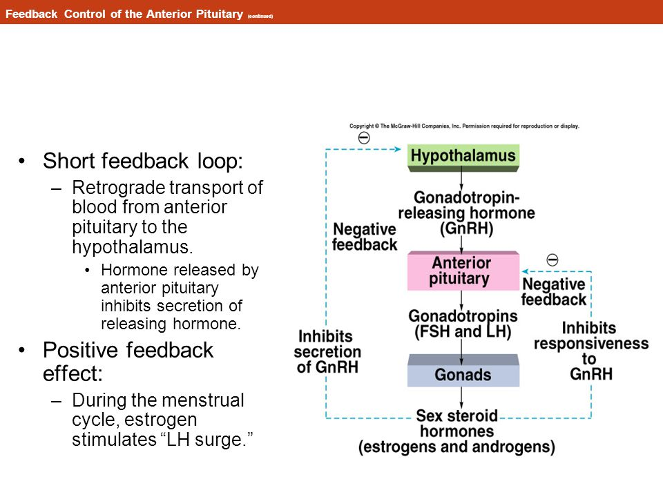 Feedback Control of the Anterior Pituitary (continued)
