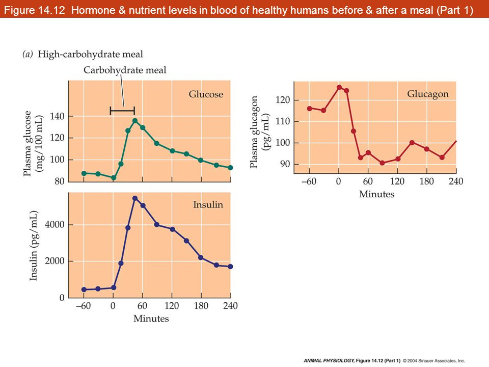 Figure 14.12 Hormone & nutrient levels in blood of healthy humans before & after a meal (Part 1)