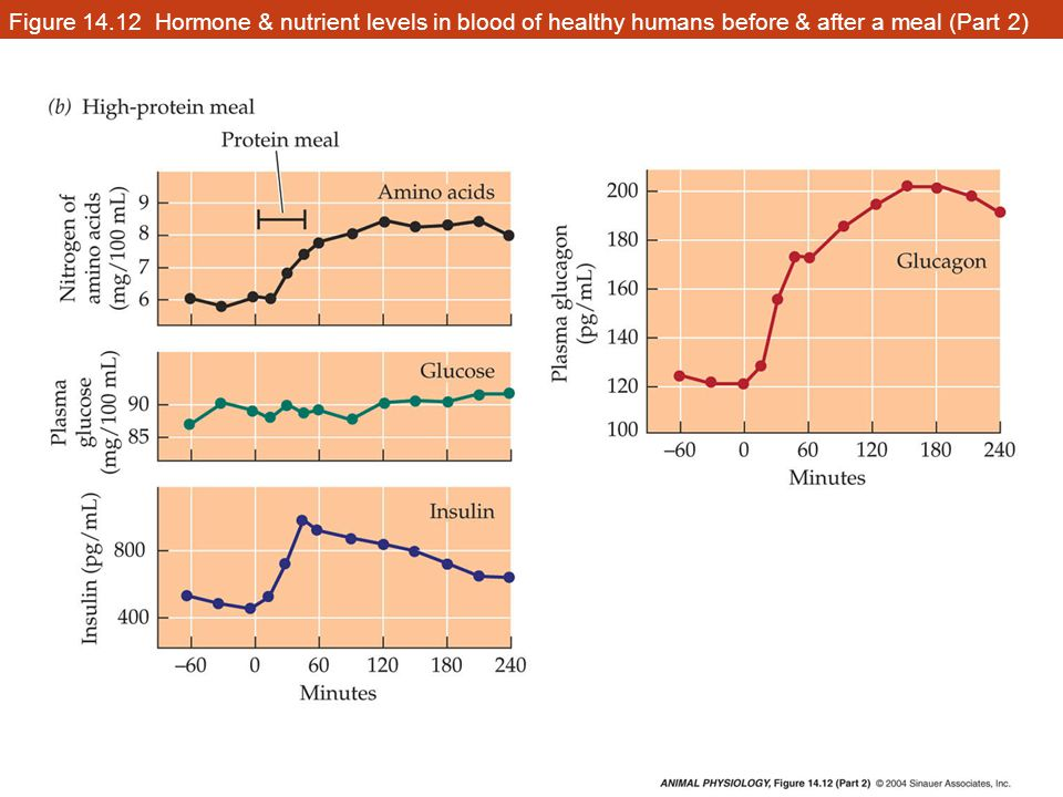Figure 14.12 Hormone & nutrient levels in blood of healthy humans before & after a meal (Part 2)