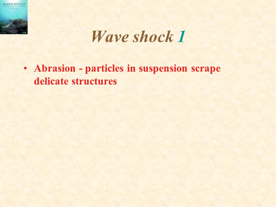 Wave shock 1 Abrasion - particles in suspension scrape delicate structures