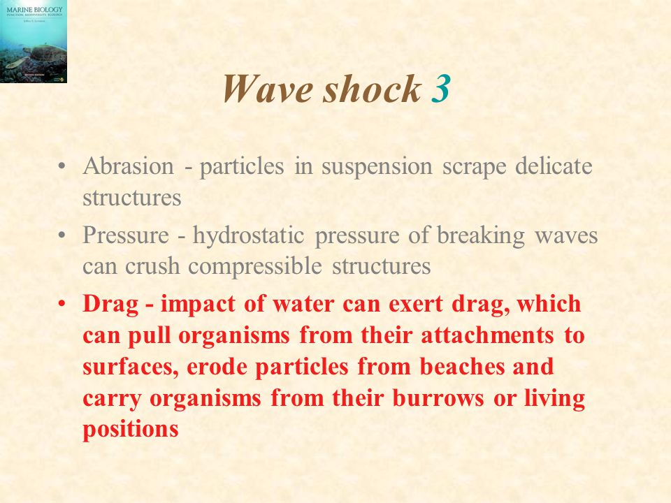 Wave shock 3 Abrasion - particles in suspension scrape delicate structures.