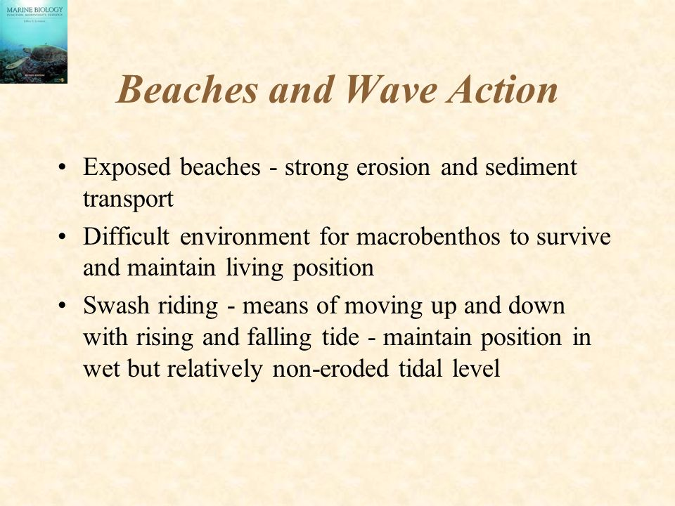 Beaches and Wave Action