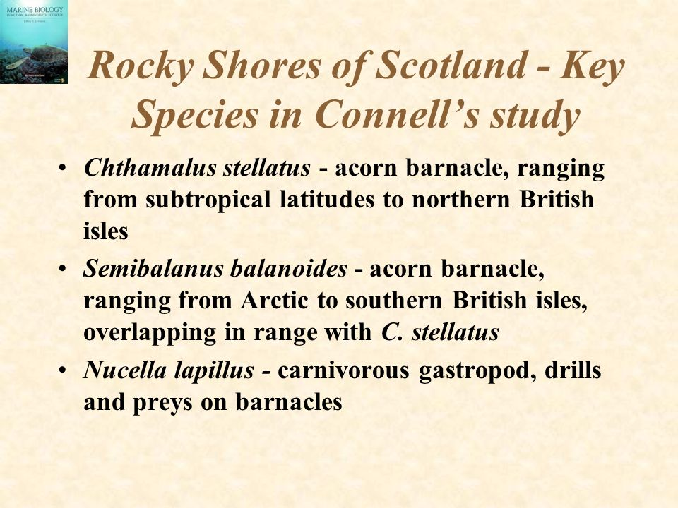 Rocky Shores of Scotland - Key Species in Connell's study