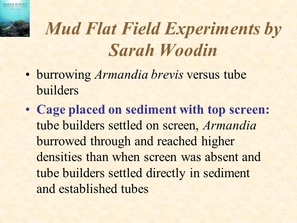 Mud Flat Field Experiments by Sarah Woodin