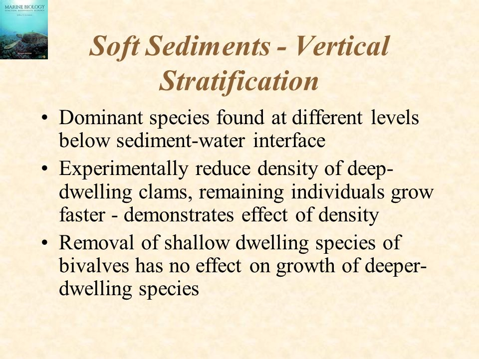 Soft Sediments - Vertical Stratification