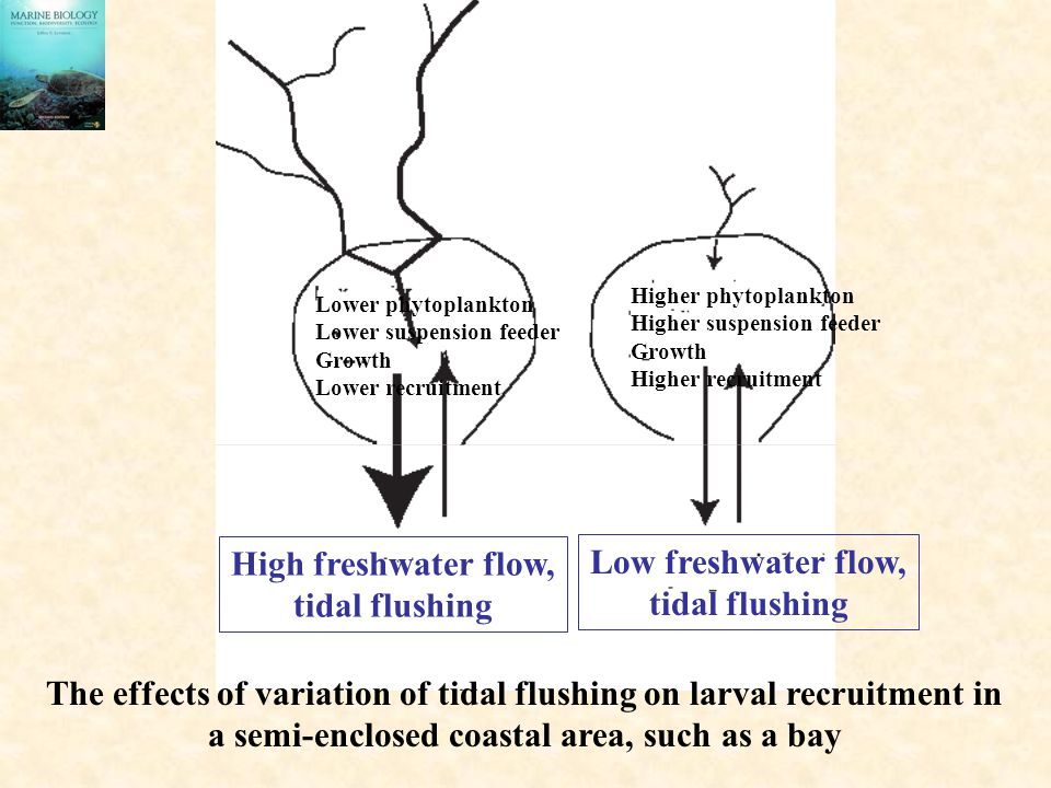 The effects of variation of tidal flushing on larval recruitment in