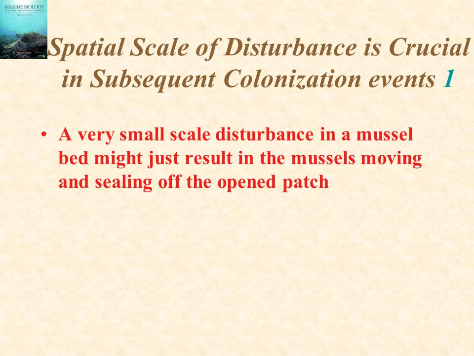 Spatial Scale of Disturbance is Crucial in Subsequent Colonization events 1