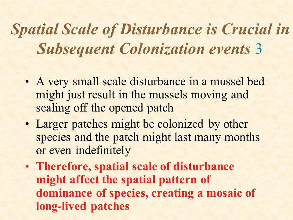 Spatial Scale of Disturbance is Crucial in Subsequent Colonization events 3