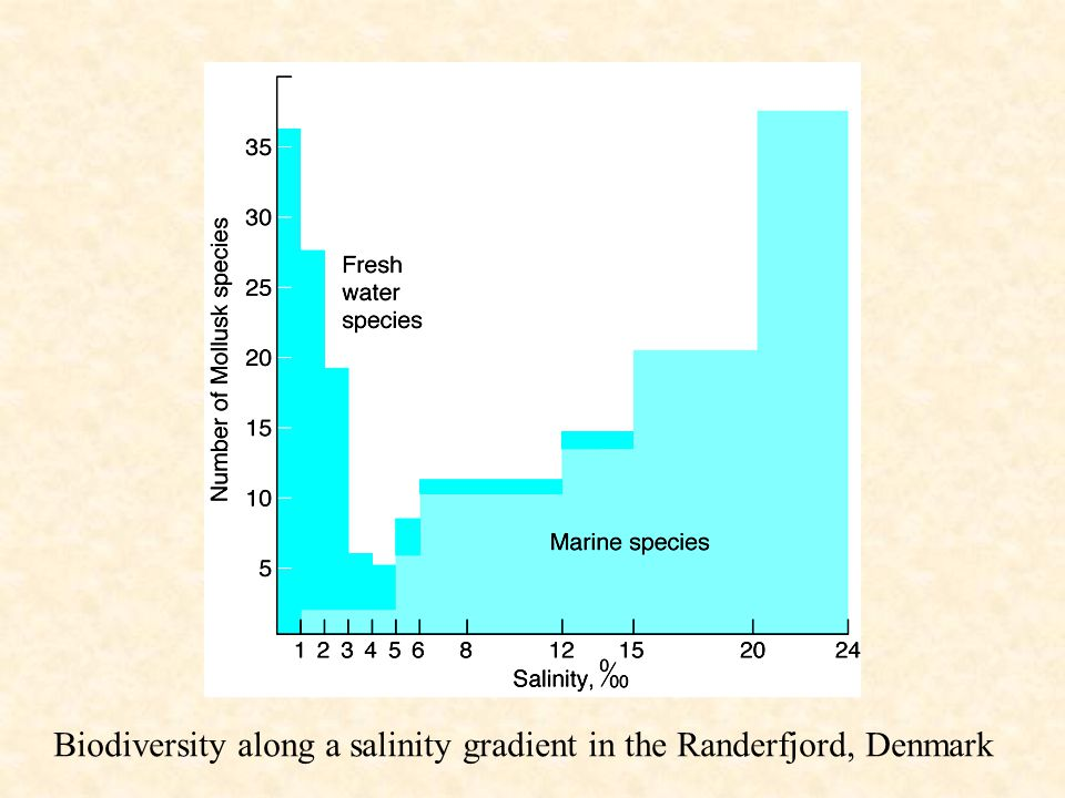 Biodiversity along a salinity gradient in the Randerfjord, Denmark