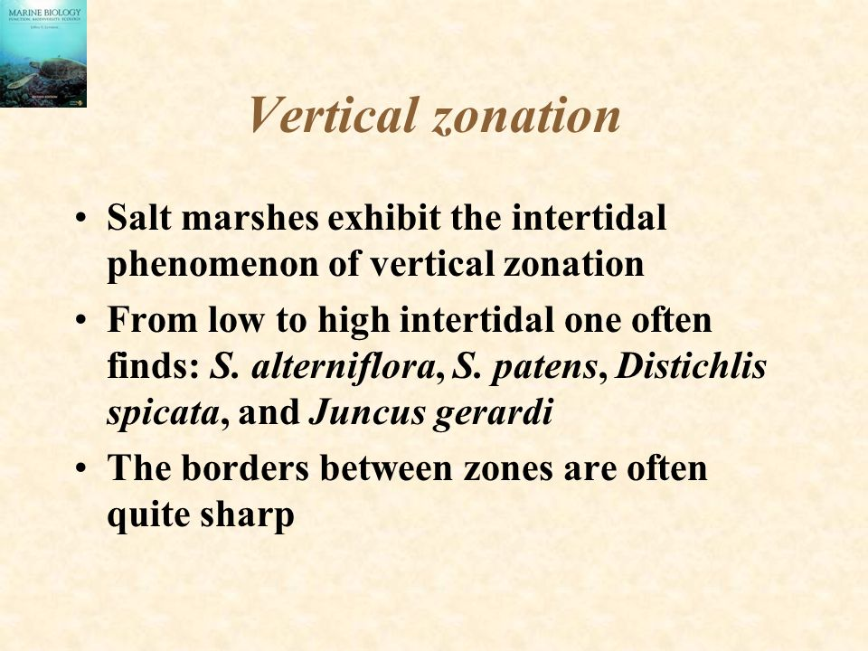 Vertical zonation Salt marshes exhibit the intertidal phenomenon of vertical zonation.