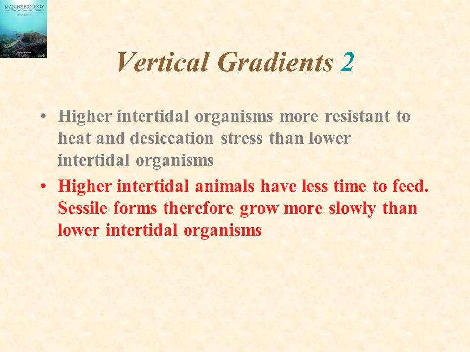 Vertical Gradients 2 Higher intertidal organisms more resistant to heat and desiccation stress than lower intertidal organisms.