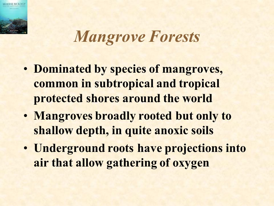 Mangrove Forests Dominated by species of mangroves, common in subtropical and tropical protected shores around the world.