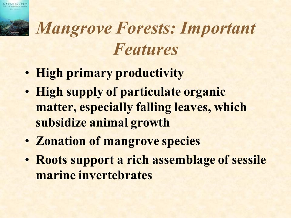 Mangrove Forests: Important Features