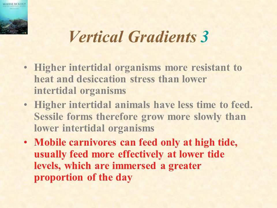 Vertical Gradients 3 Higher intertidal organisms more resistant to heat and desiccation stress than lower intertidal organisms.