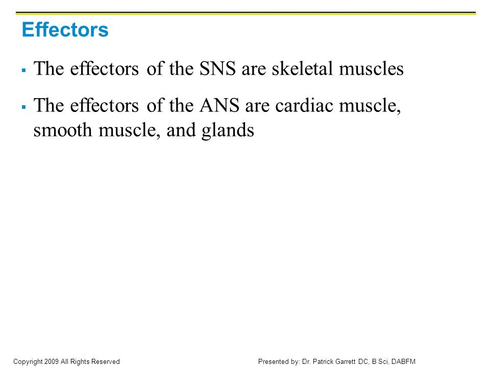 Effectors The effectors of the SNS are skeletal muscles.